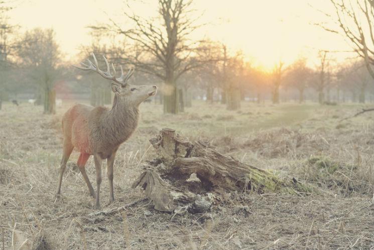 Beautiful light illuminates a reindeer in the countryside